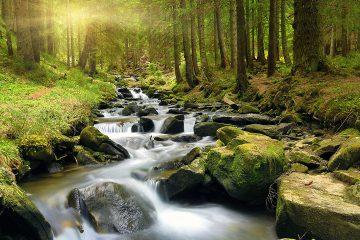 Waldidylle mit Fluss